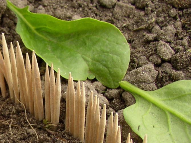 Fehlgeschlagen Projekt: Keeping Schnecken weg von einem Gemüsegarten