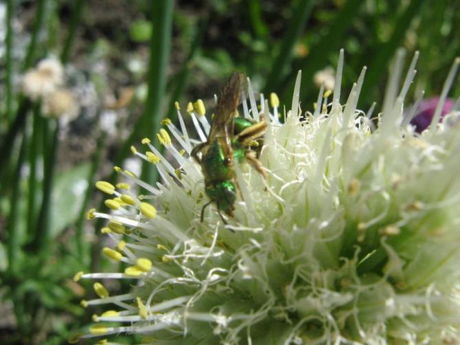 Speichern Sie die Bienen vor dem Aussterben zu!  Du kannst es schaffen.
