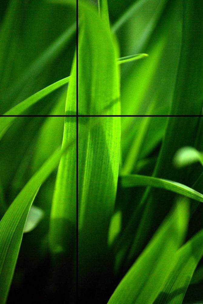 Fotografieren von Blumen und Pflanzen