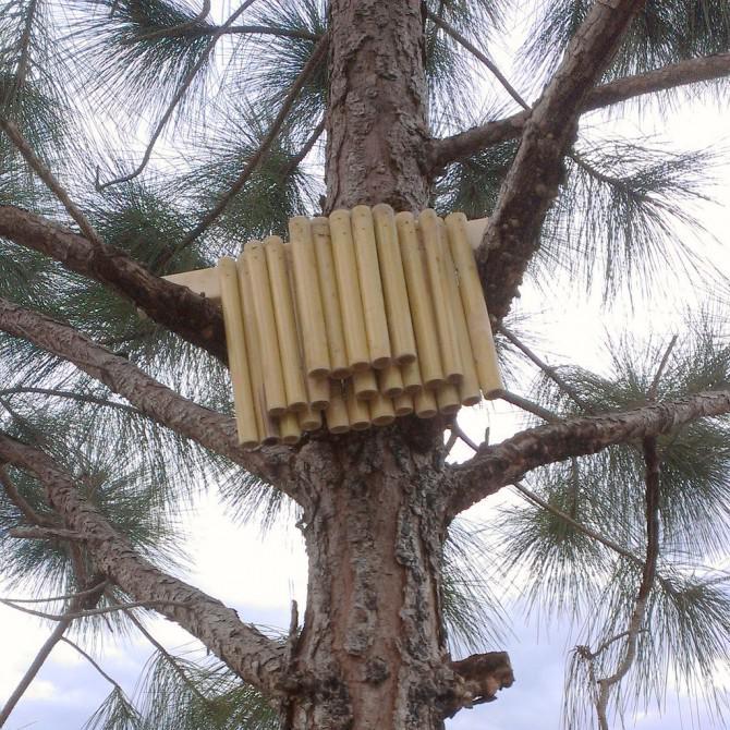 Solitary Bee Habitat