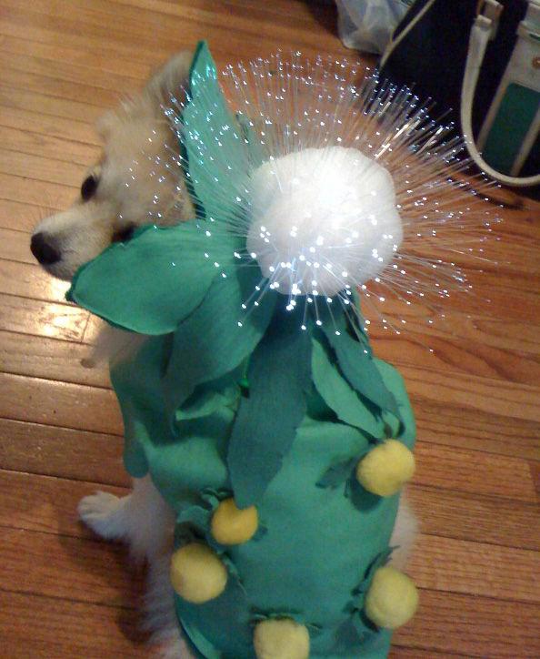 Aufleuchten-Dandelion Doggy Kostüm