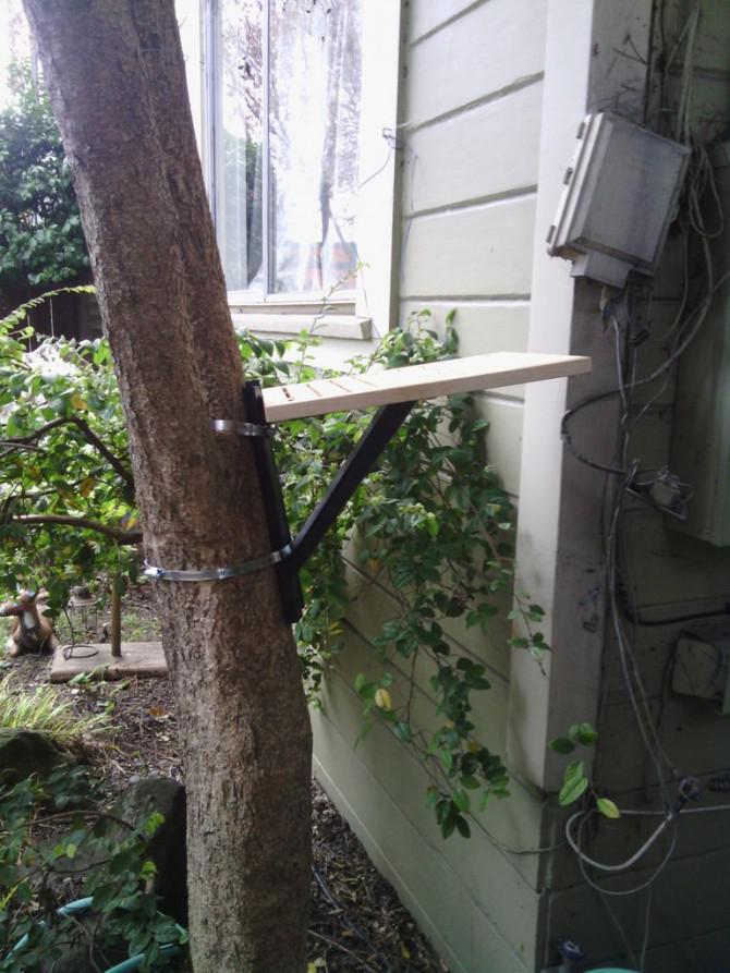 Wie man ein Real Live-Baum in einen Kratzbaum Drehen w ...
