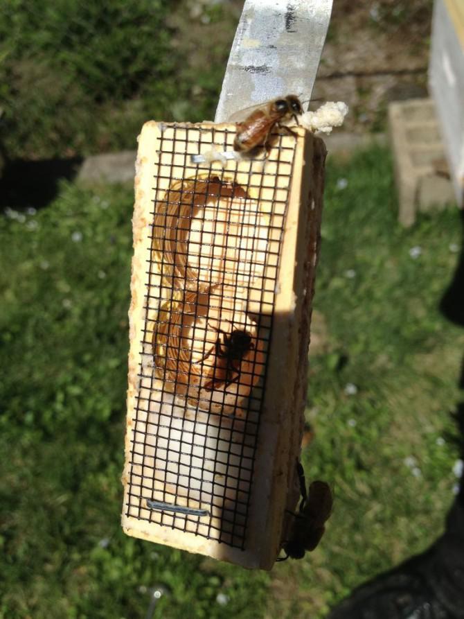 Hive / Installieren Sie eine Bienenkolonie aus einem Paket