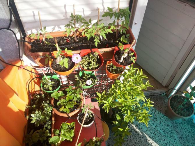 Einfache, skalierbare Raspberry Pi Garten irrogation