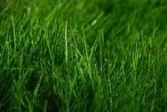 Gehen Grün von Wachsende Grün: Wie man Energie aus Grasextrakt