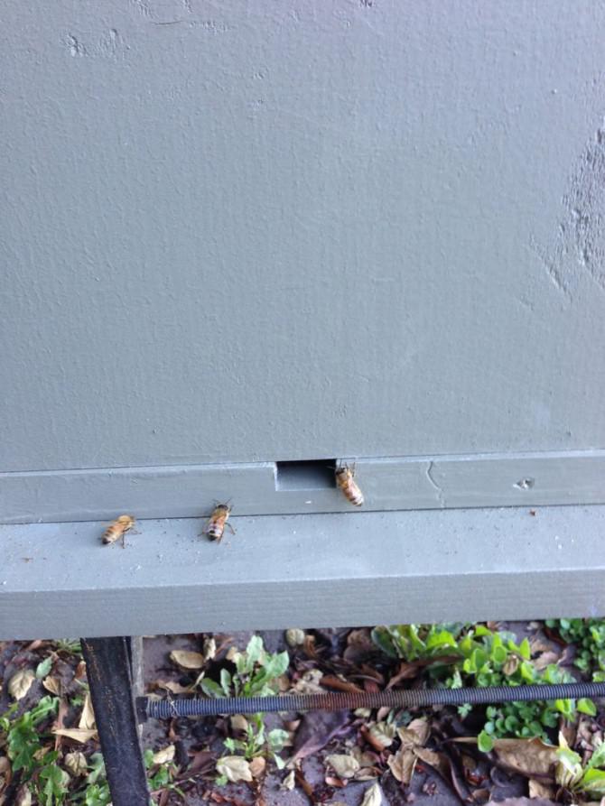 Ausgliederung ein Paket von Bienen