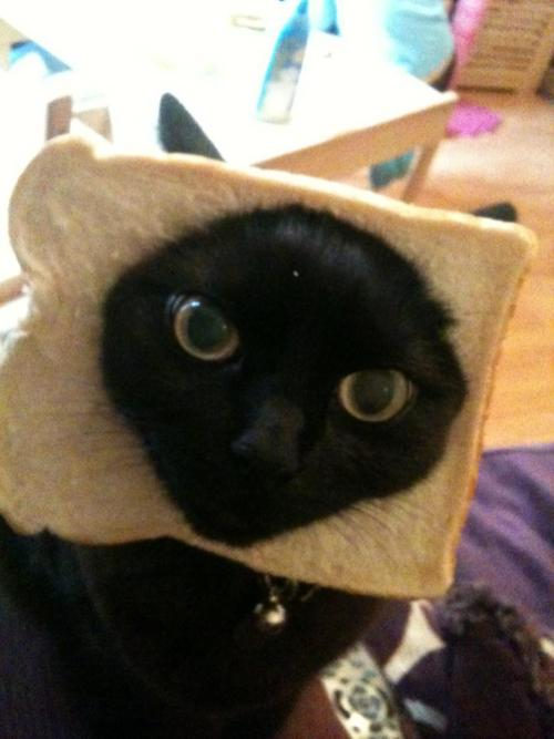 Cat Breading Kostüm