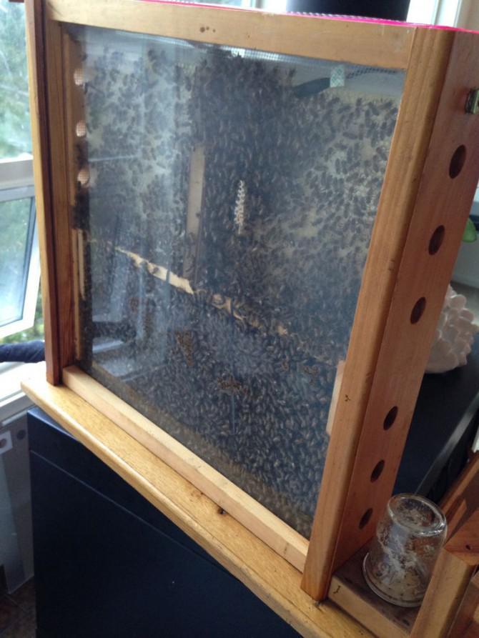 Wie Sie Ihre Busy Bees Dokumentieren