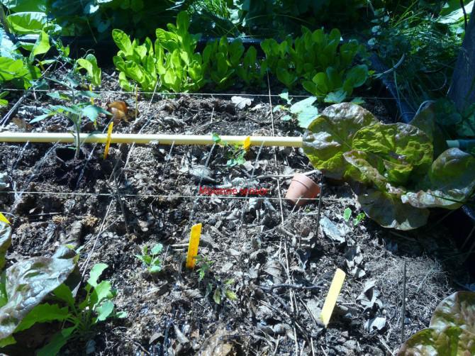 Bewässerung Ihres Gartens mit einem Operationsverstärker: Die Schaltung, Materialliste